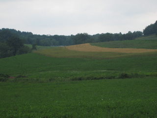 heres-a-picture-of-some-contour-farming-we-do-to-slow-soil-erosion-on-our-hillsides