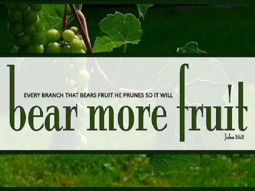 Hasil gambar untuk bear more fruit