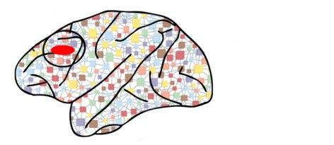Working Memory DLPFC Knowing Neurons Don Davies