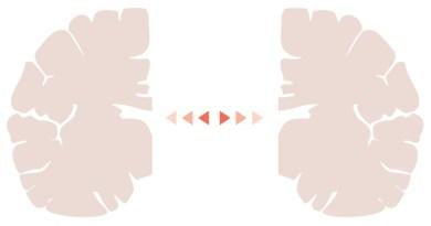 Split Brain Knowing Neurons