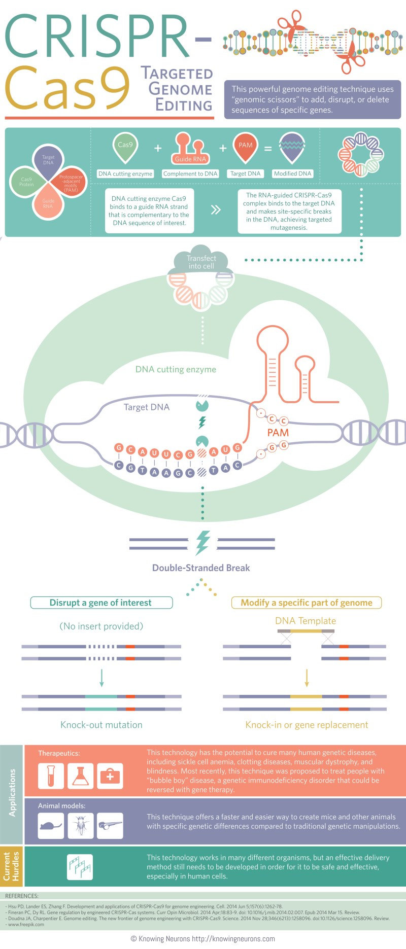 CRISPR_Updated_FINAL_size