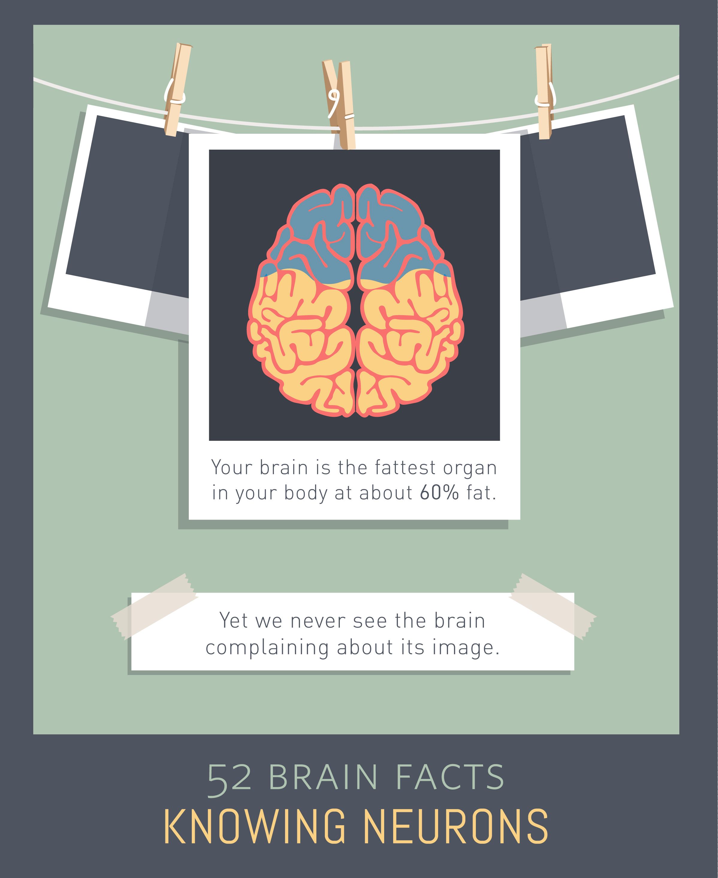 Myth or Fact? The brain is the fattest organ in the body.
