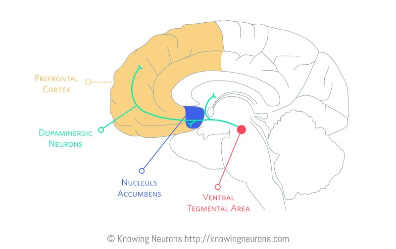 Dopamine_Knowing-Neurons