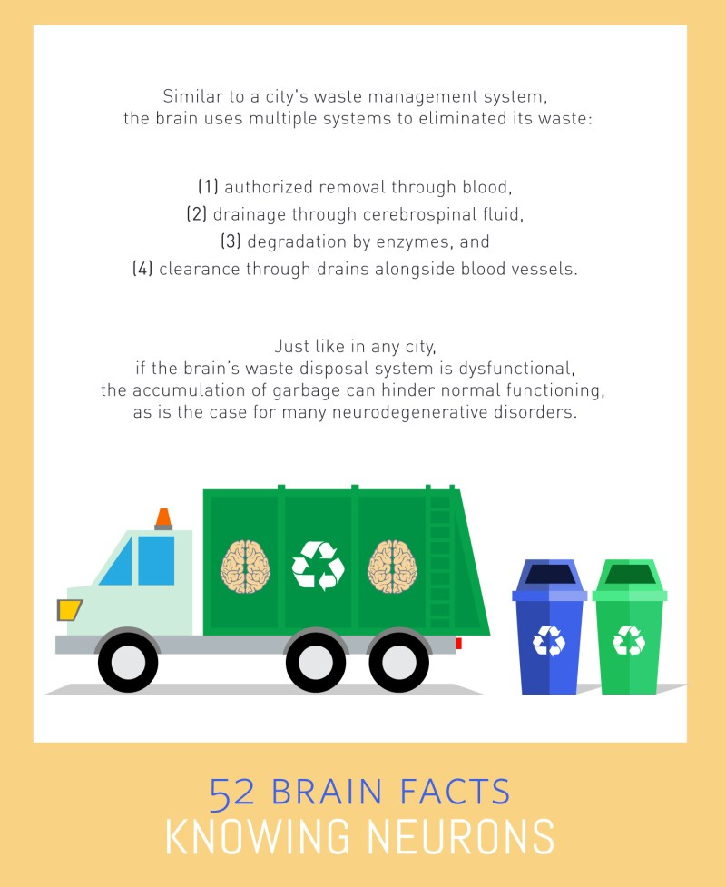 Myth or Fact? Your brain has a waste disposal system.