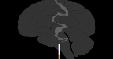 Brain Cigarette Knowing Neurons