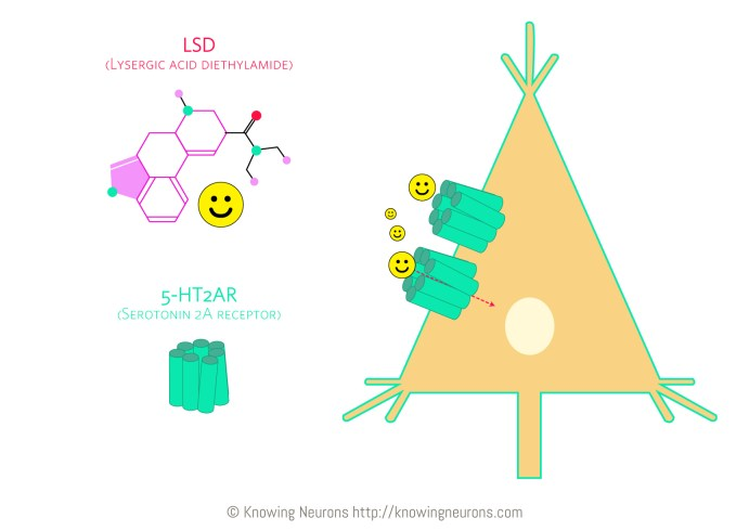 LSD_Knowing-Neurons