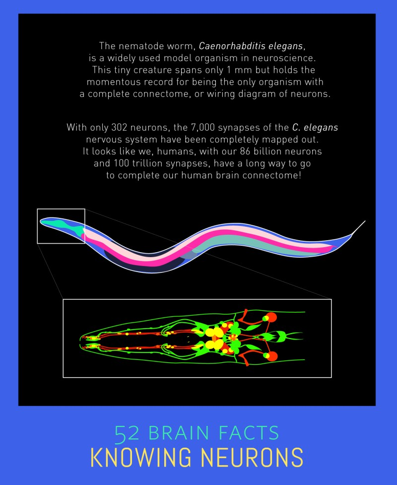 Myth or Fact? The nematode is the only organism with a complete neuronal map.