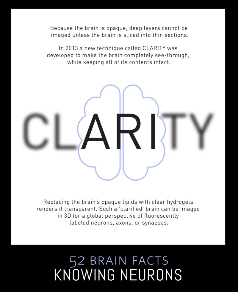 Myth or Fact? It is possible to make the whole brain transparent.