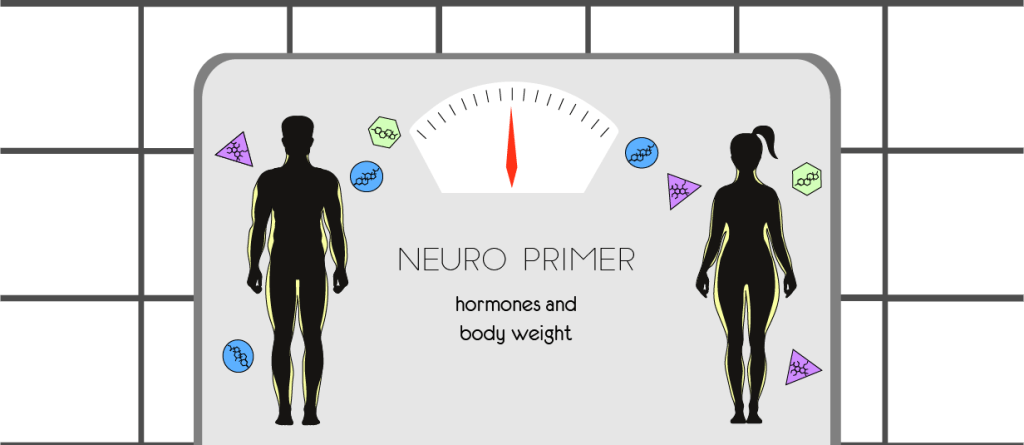 Neuro Primer: Hormones and Body Weight Feature Image