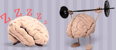 A sleeping brain on the left versus a brain lifting weights on the right. Illustrated by Rajamani Selvam.