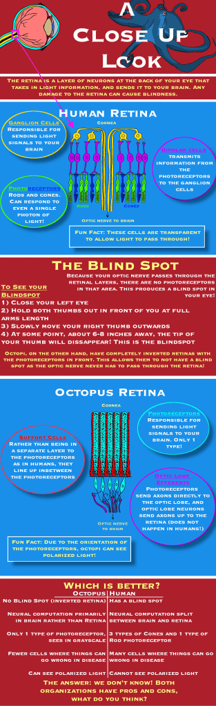 A Close Up Look Infographic