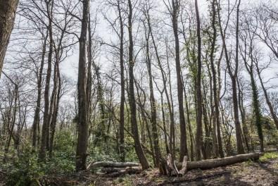 Chestnut Woodland