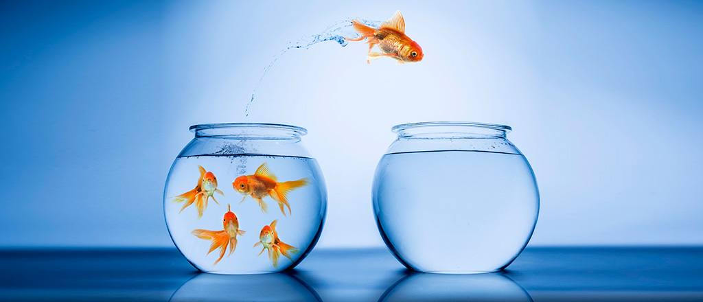 serial-entrepreneur-goldfish