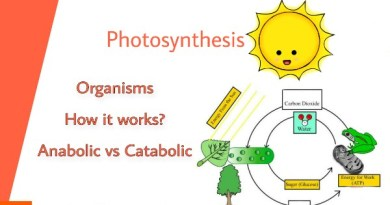 What is photosynthesis in biology
