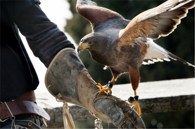 10 Modern Sayings That Came From the World of Falconry