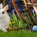 The Secrets of the Easter Bunny