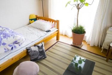 部屋に置くと空間がグッと引き締まるグリーンの種類や植物