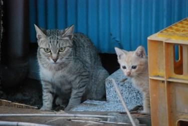 野良猫の親子を捕獲するには?保護した後の対応とは