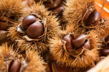 栗の賞味期限は意外と短い!茹でた栗は冷凍保存しよう!