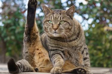 野良猫の餌やりは迷惑行為?餌やりが迷惑行為になる実際の理由