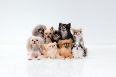犬を飼うと大変と感じる事を紹介。金銭面や老後が心配という事