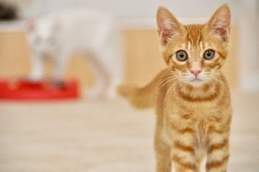 猫は自分が可愛いことを自覚している?猫の可愛い行動とその理由