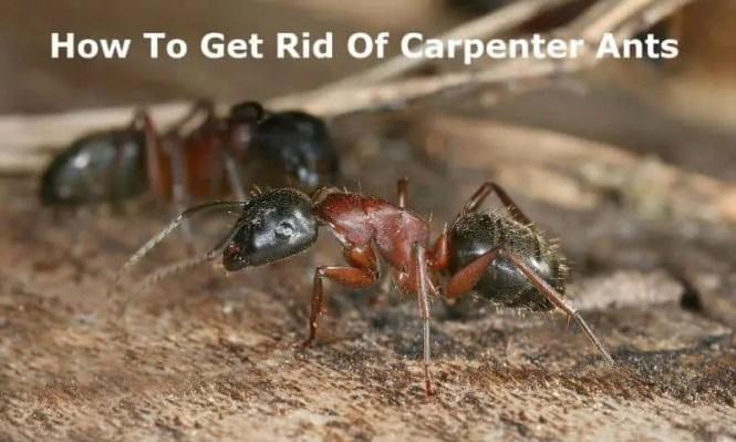 5761661 Web1 1 Ants Farming Aphids Modernfarmer Com Jpg
