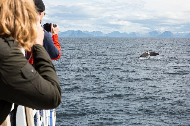 Whale Watching_By photographer Daniele Zanoni