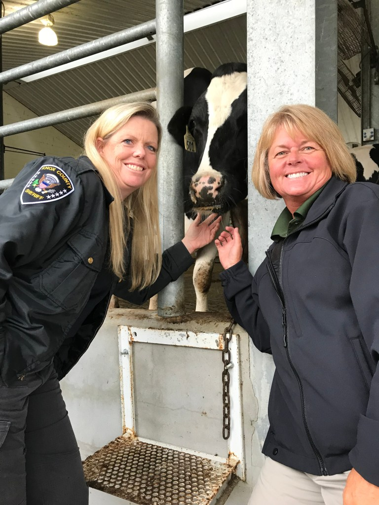 KCSO animal control officers petting a cow
