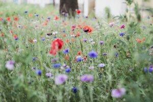 luka, may, flowers