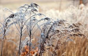 frost, grass, winter