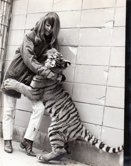 Dee White, overcoming sexism at the St. Louis Zoo, and working  with a Bengal Tiger.