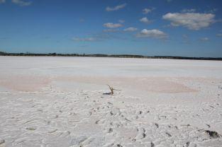 Ein einsamer Baum im Salzsee