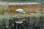 """Im """"privaten"""" Teil des Boardwalks tobten sich diese komischen Vögel aus"""