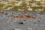 ... sind in Wahrheit die Überreste eines 1948 hier vor der Küste untergegangenen Schiffs
