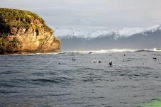 Hier in der Nähe der Insel sind die Tiere richtig aktiv und toben sich aus