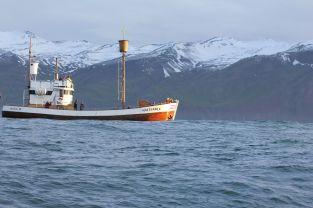 Neben unserem Speedboot gesellt sich auch ein Fischkutter zur Waljagt