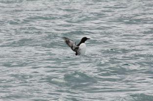 Trotzdem könnten manche der Bilder auch aus einer Pinguindoku sein