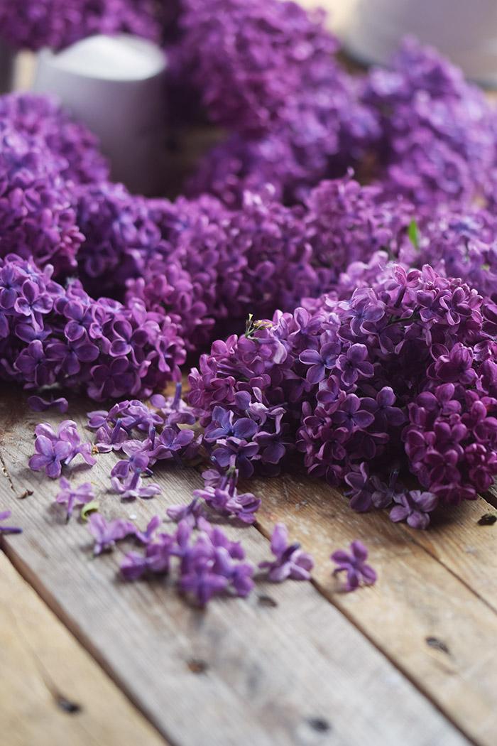 Flieder Blueten Sirup - Lilac Syrup - Fliedersirup (3)