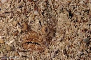 camouflage_1_predator_med