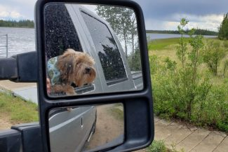 ruby looking out car window in mirror