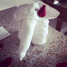 So the baby elephant dressed up for the weekend today ...