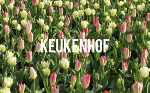 Let's Get Seasonal! Keukenhof!