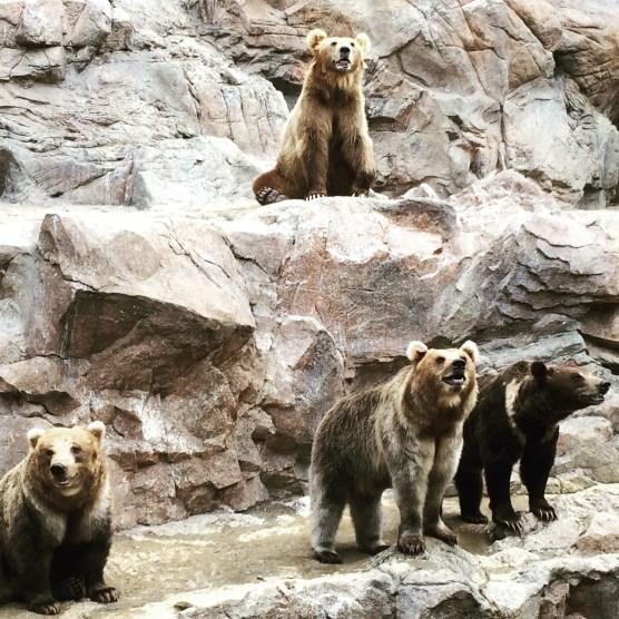 Hengqin Aqua Park - Bear