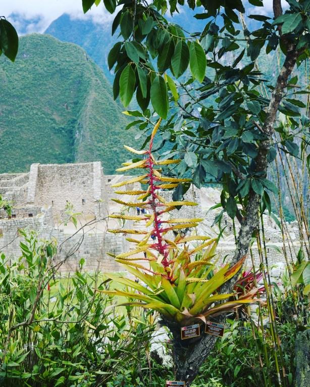 Machu Picchu - 17
