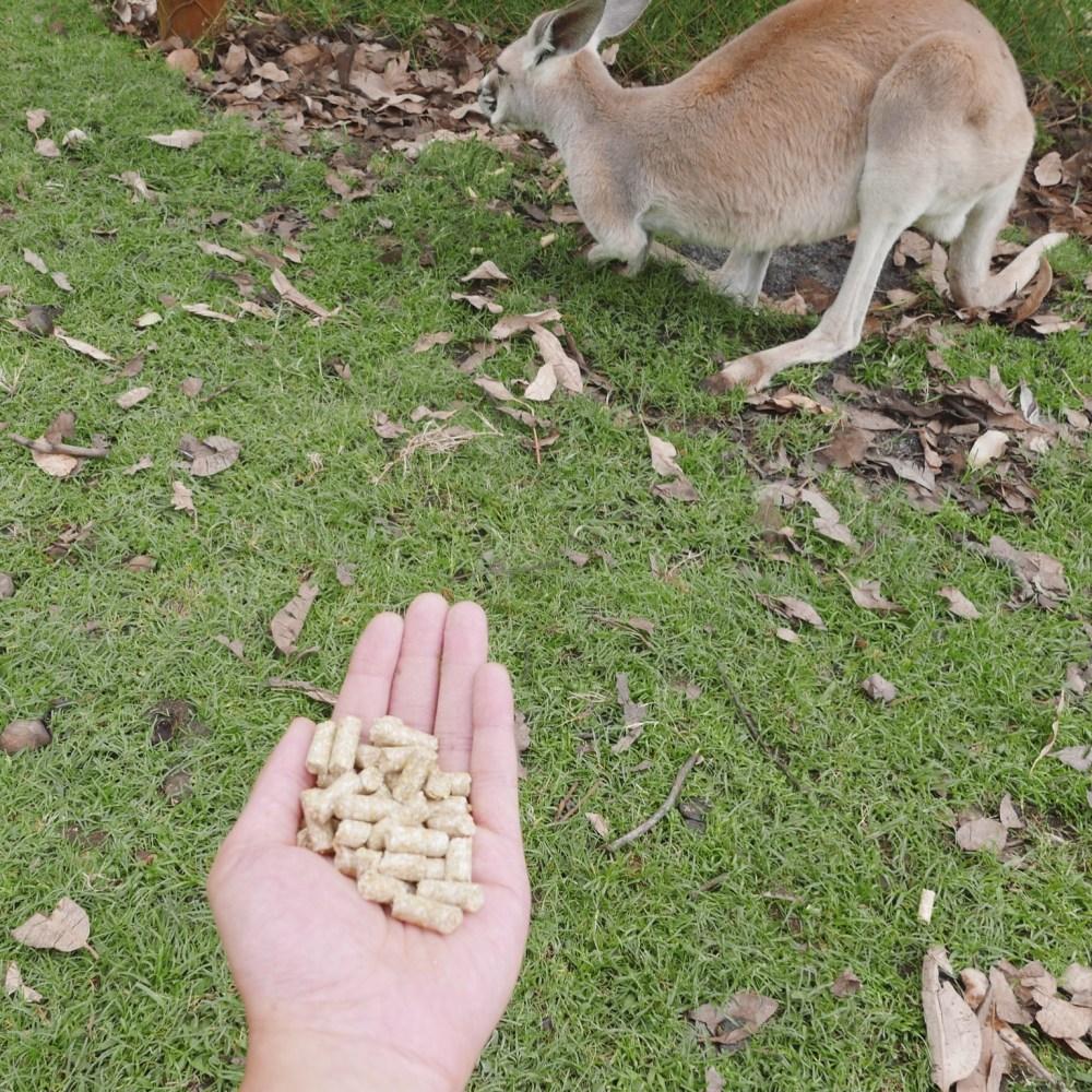 Perth - Caversham Wildlife Park 13