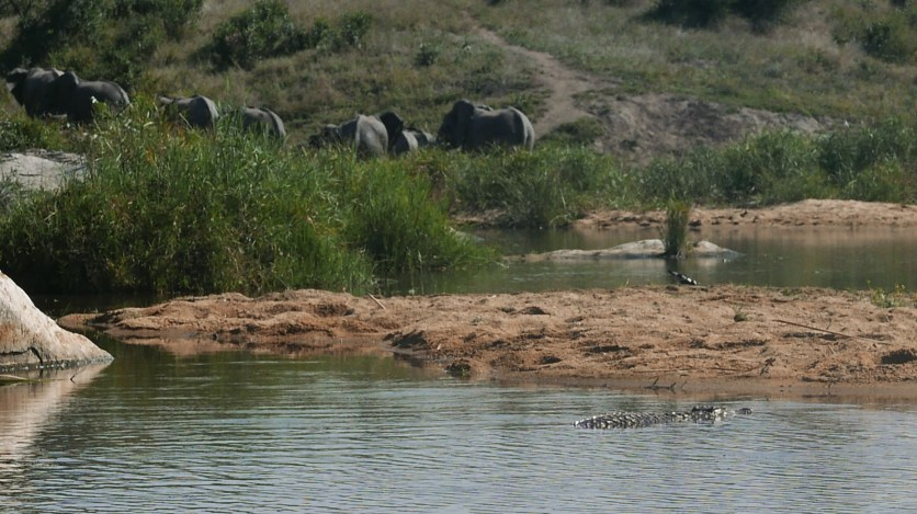 South Africa, Kruger - Safari (5)