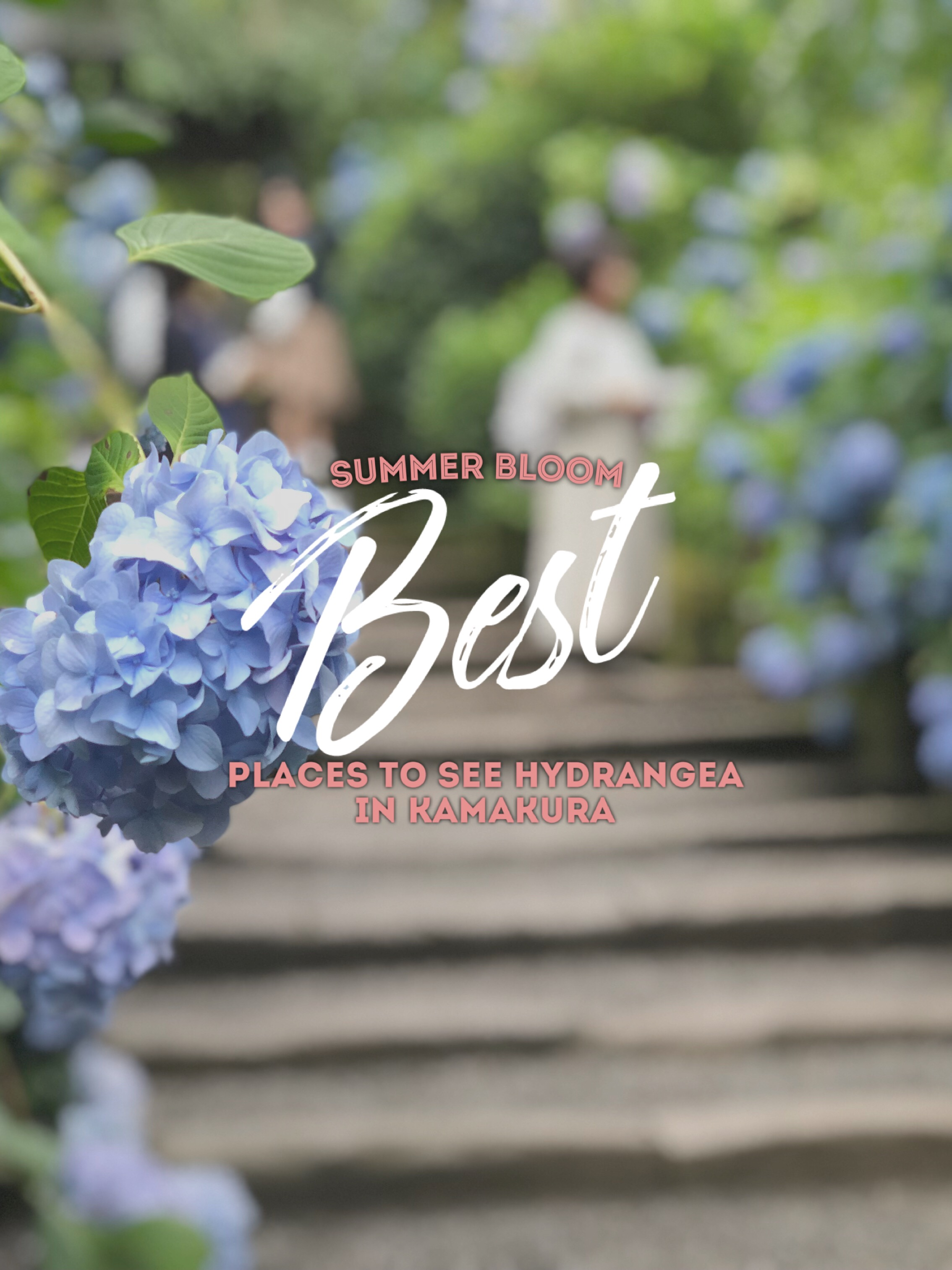 How to Plan Your Day Trip to See Hydrangea in Kamakura
