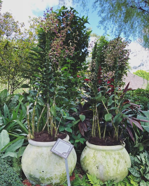Botanic Gardens 4