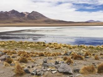 5 Laguna Blanca 1